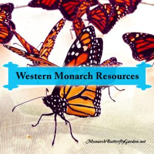 Western Monarch Butterfly Resources