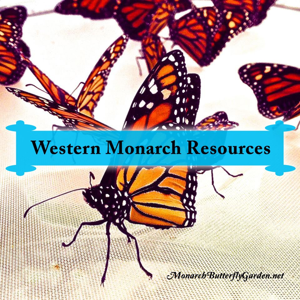 A list of helpful resources for learning how to better support western monarch butterflies.