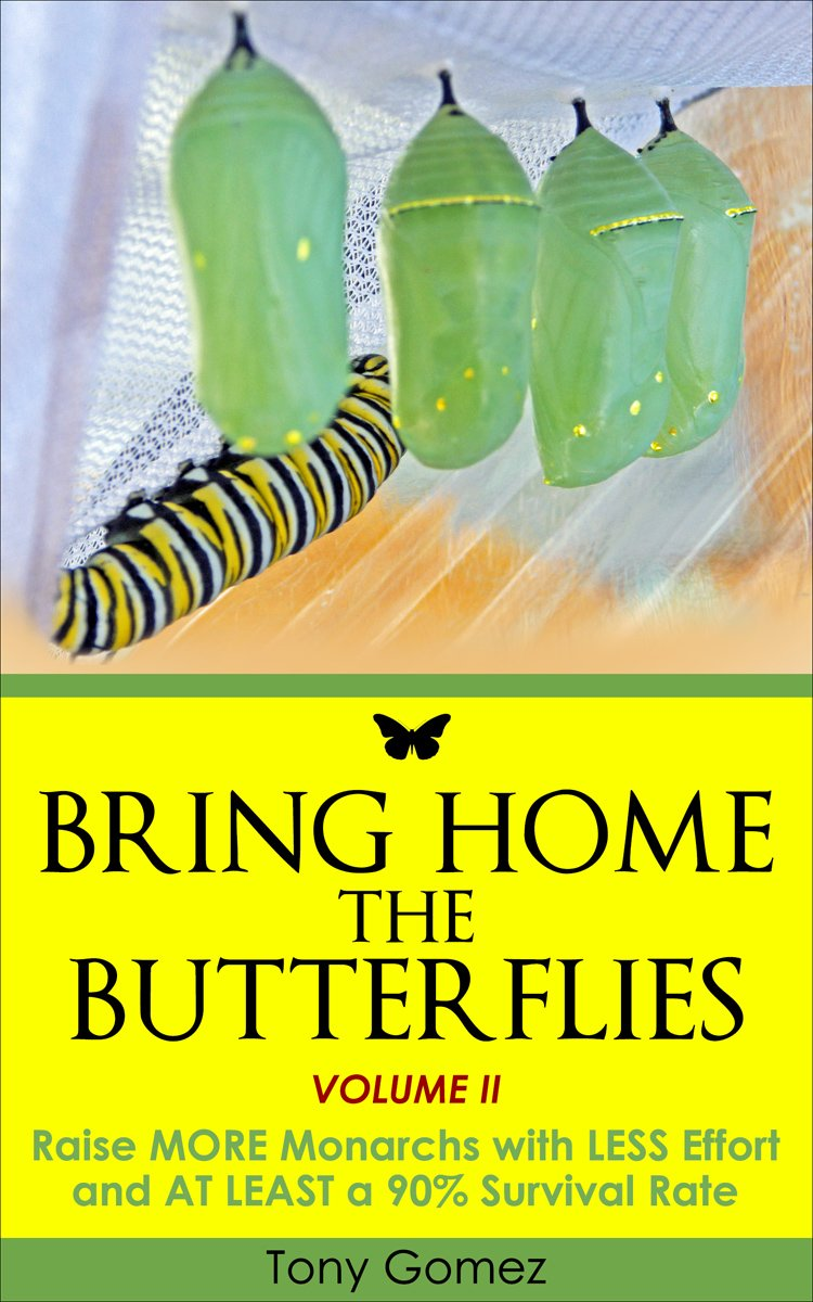 how to start a monarch butterfly garden at home