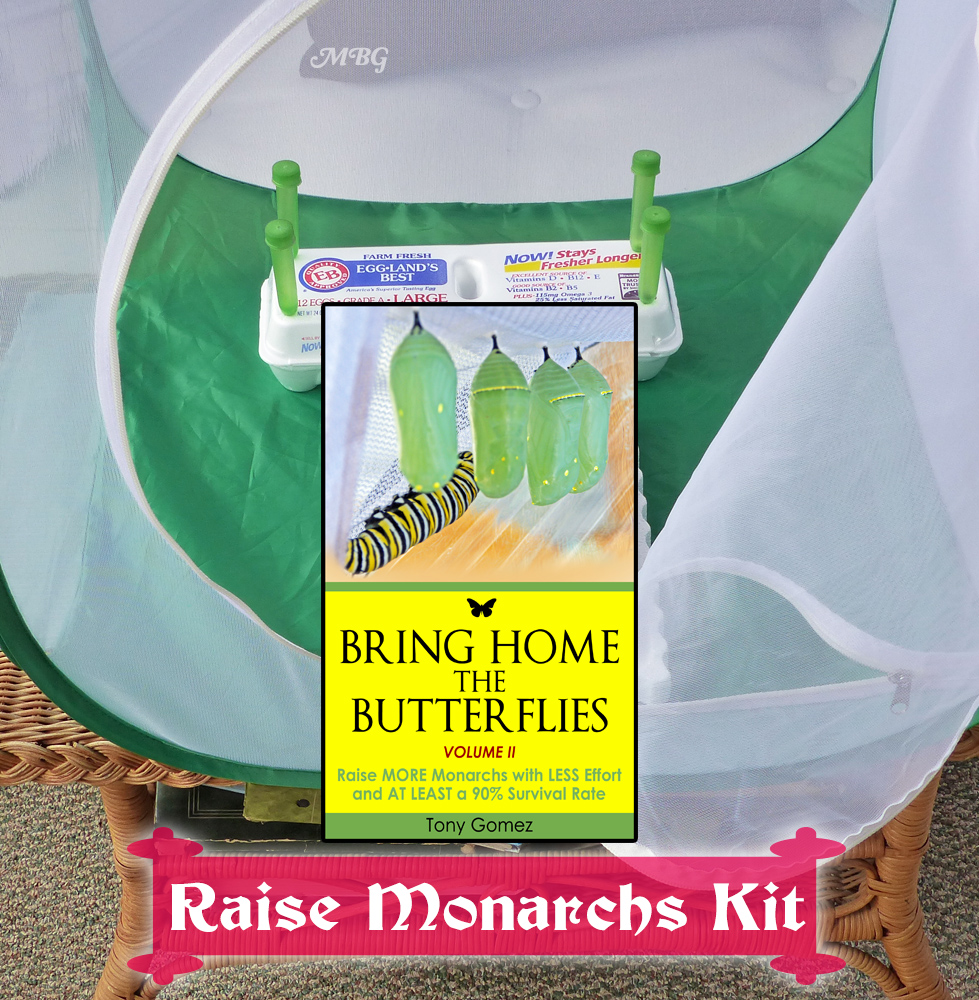 The Butterfly Growing Kit is a monarch butterfly kit that includes a cage for raising butterflies, milkweed tubes for stem cuttings, and a digital book about how to raise monarch butterflies indoors. Get the tools you need for raising healthy monarch butterflies...