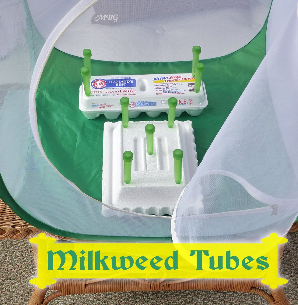 Floral tubes and floral tubes with picks are optional butterfly kit accessories to keep milkweed and other host plants fresh for very hungry caterpillars