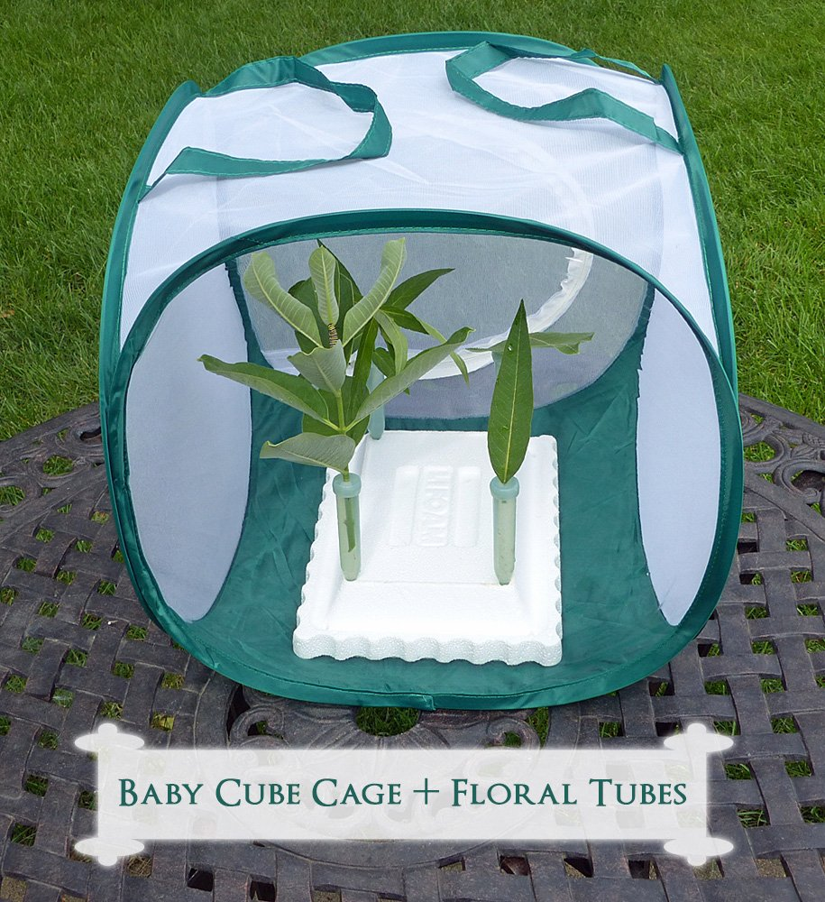 Raise up to 15 monarch caterpillars in the baby cube butterfly cage. Viewing window allows you to see the monarch life cycle first hand. Get more info and find the perfect caterpillar cage for raising happy, healthy monarch butterflies.