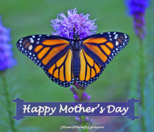 Mother's Day Poem with Female Monarch Butterfly