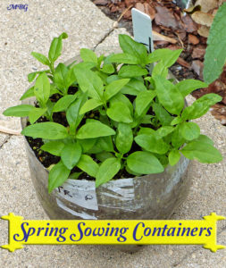 Spring Sowing Containers are the easy to start warm weather milkweed seeds including tropical milkweed.
