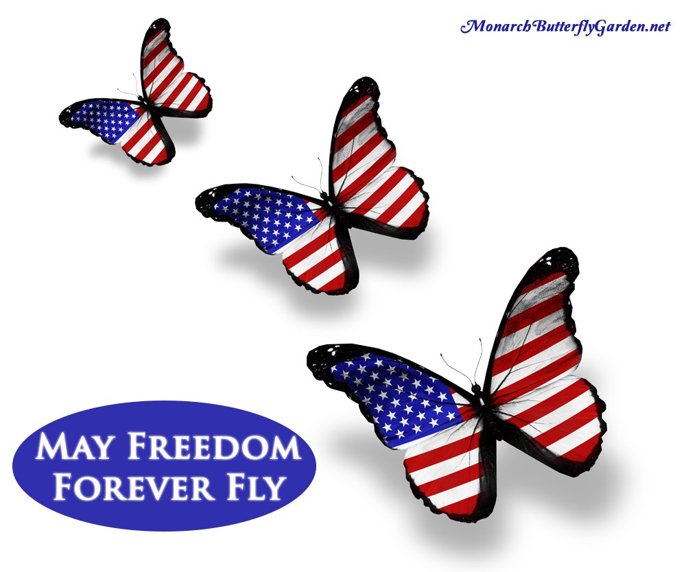 Fourth of July Quote with American Monarch Butterflies- May Freedom Forever Fly