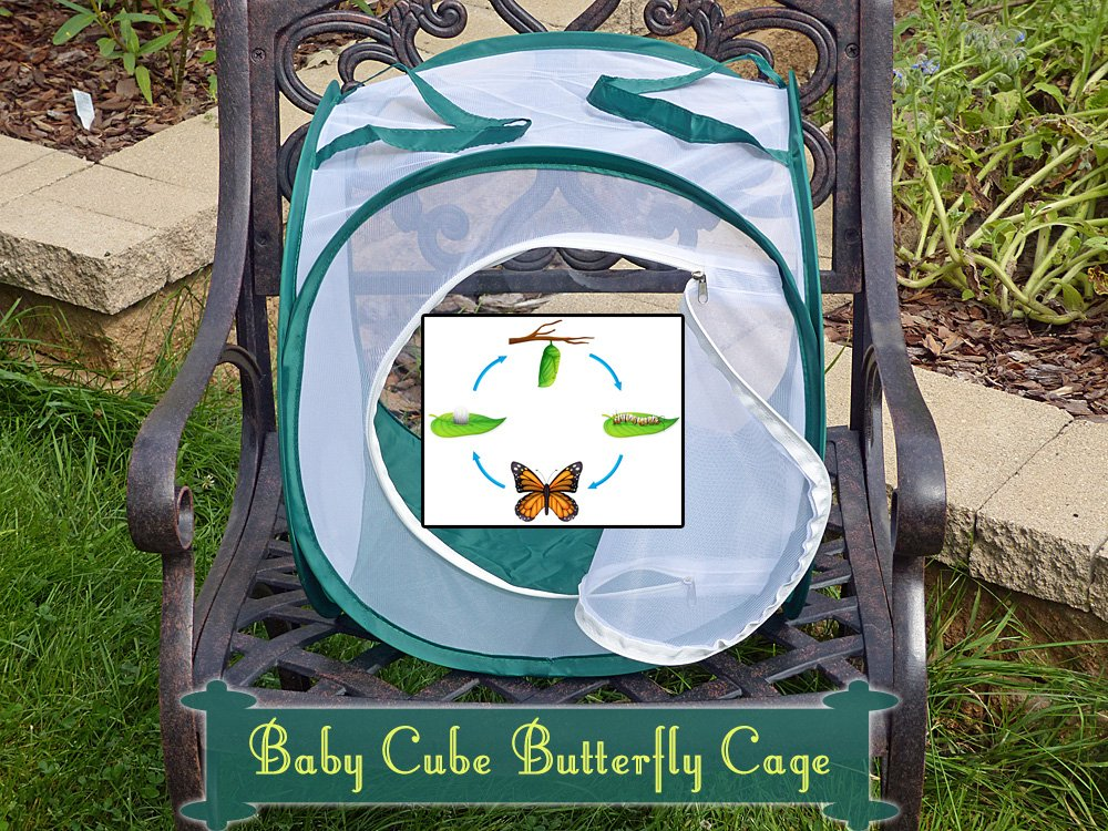 Baby Cube Caterpillar cage for Raising Monarch Butterflies- Butterfly Gift Idea