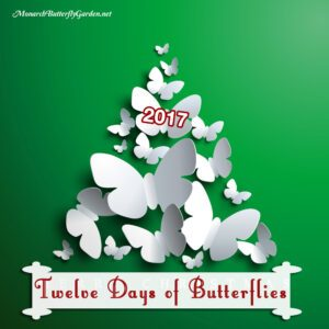 Twelve Days of Butterflies 2017- 12 Butterfly Gift Ideas and Butterfly Gifts for the Holidays