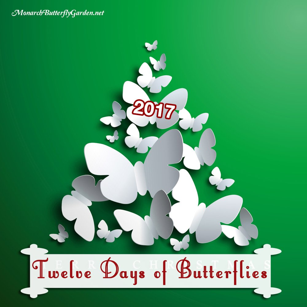 3a9b7d012cca Twelve Days of Butterflies 2017- 12 Butterfly Gift Ideas and Butterfly Gifts  for the Holidays