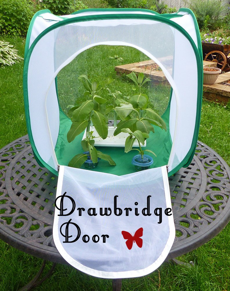 Big Cube Butterfly Cage with Drawbridge Door Design for Easy Access. Raise more Monarchs with Less Effort!