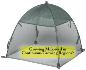 How to Save more milkweed in continuous growing regions? Cover your milkweed to keep it healthy and allow it to mature so it can eventually benefit more monarch caterpillars.