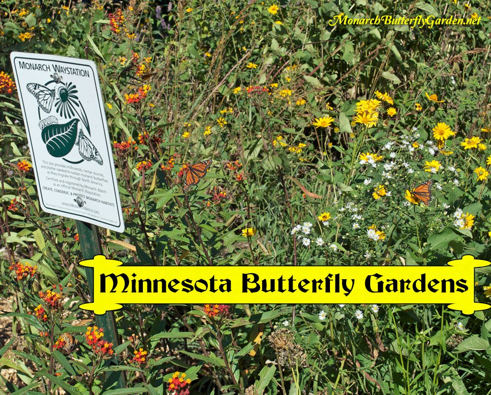 Minnesota Butterfly Garden and Monarch Waystation- Lake Nokomis Naturescape Gardens