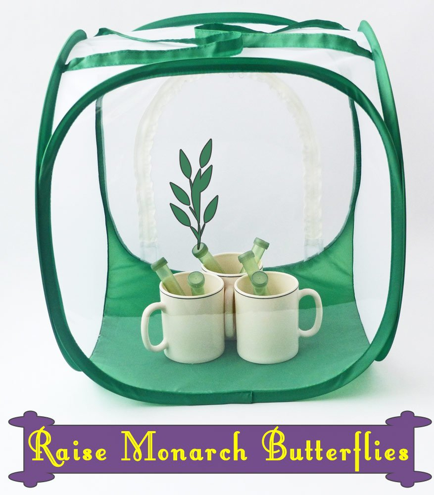 Baby Cube Butterfly Cage- Butterfly Gift Idea