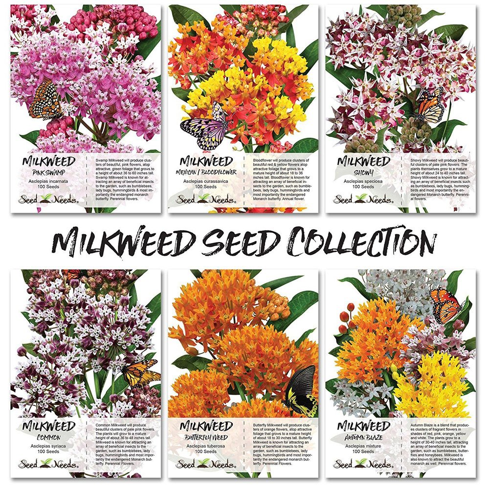 Milkweed Seeds Mix 6 pack- Butterfly Gift Idea