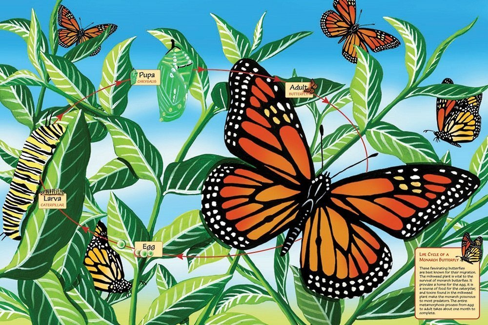 Monarch Life Cycle Puzzle for Kids- 48 Pieces