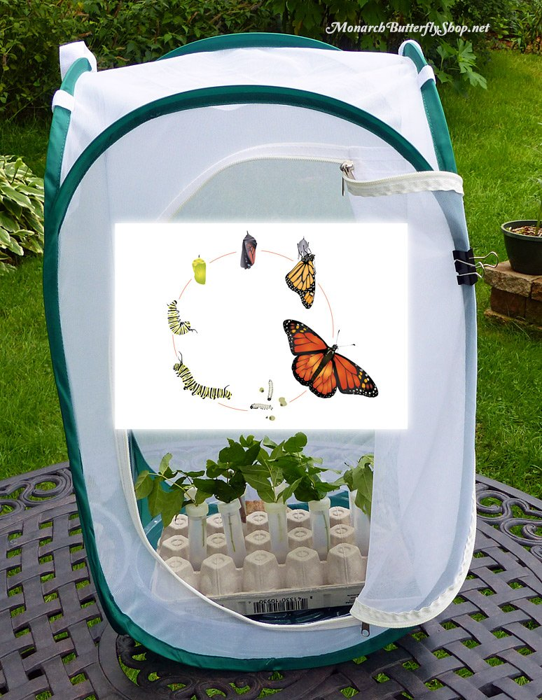 Tall Baby Butterfly Cage- Butterfly Gift Idea