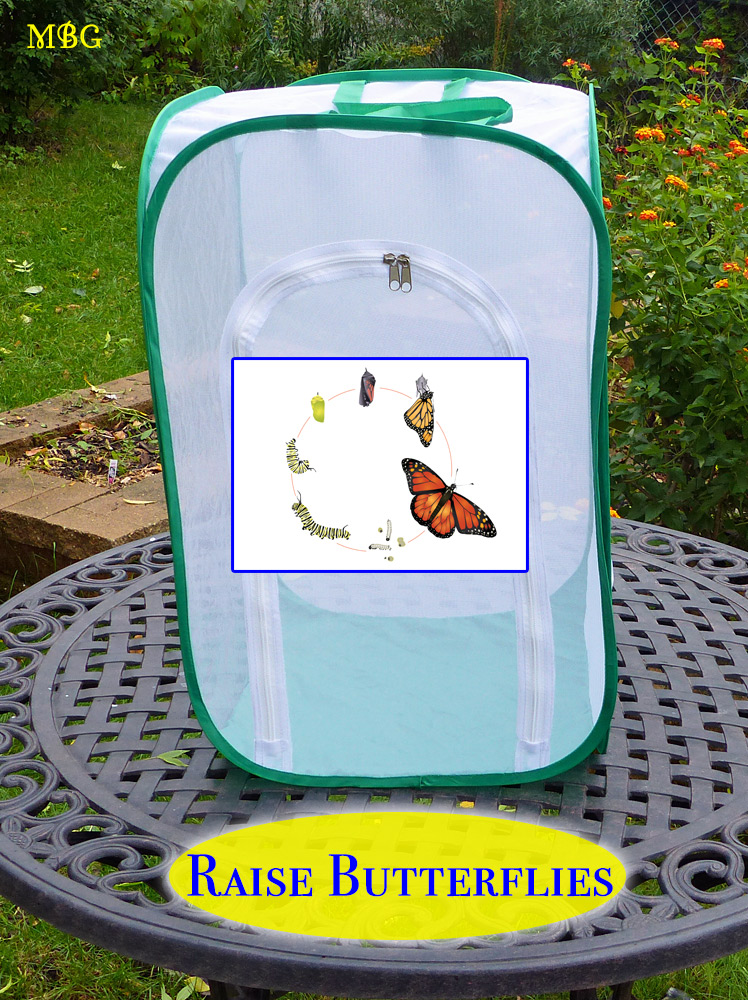 Butterfly Gift Idea for Mom- Tools and Info for Raising Butterfly Babies