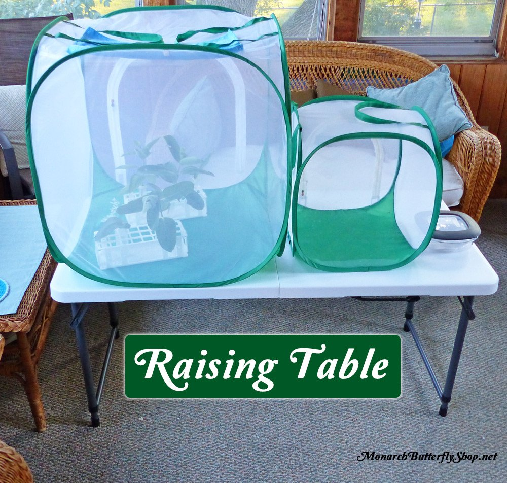 Adjustable Butterfly Cage Table for Raising Monarchs and more