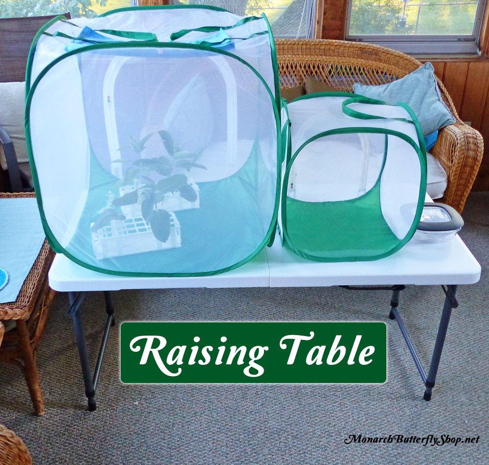 c39635955e10e5 Adjustable Butterfly Cage Table for Raising Monarchs and more