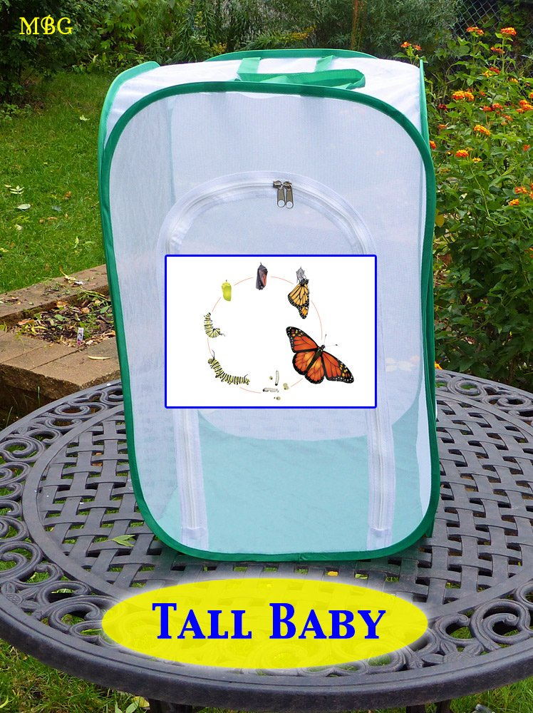 Tall Baby Butterfly Cage for Raising Monarchs- Butterfly Gift Idea