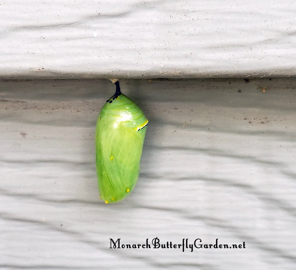 Where to look for a chrysalis outside idea 17: house siding