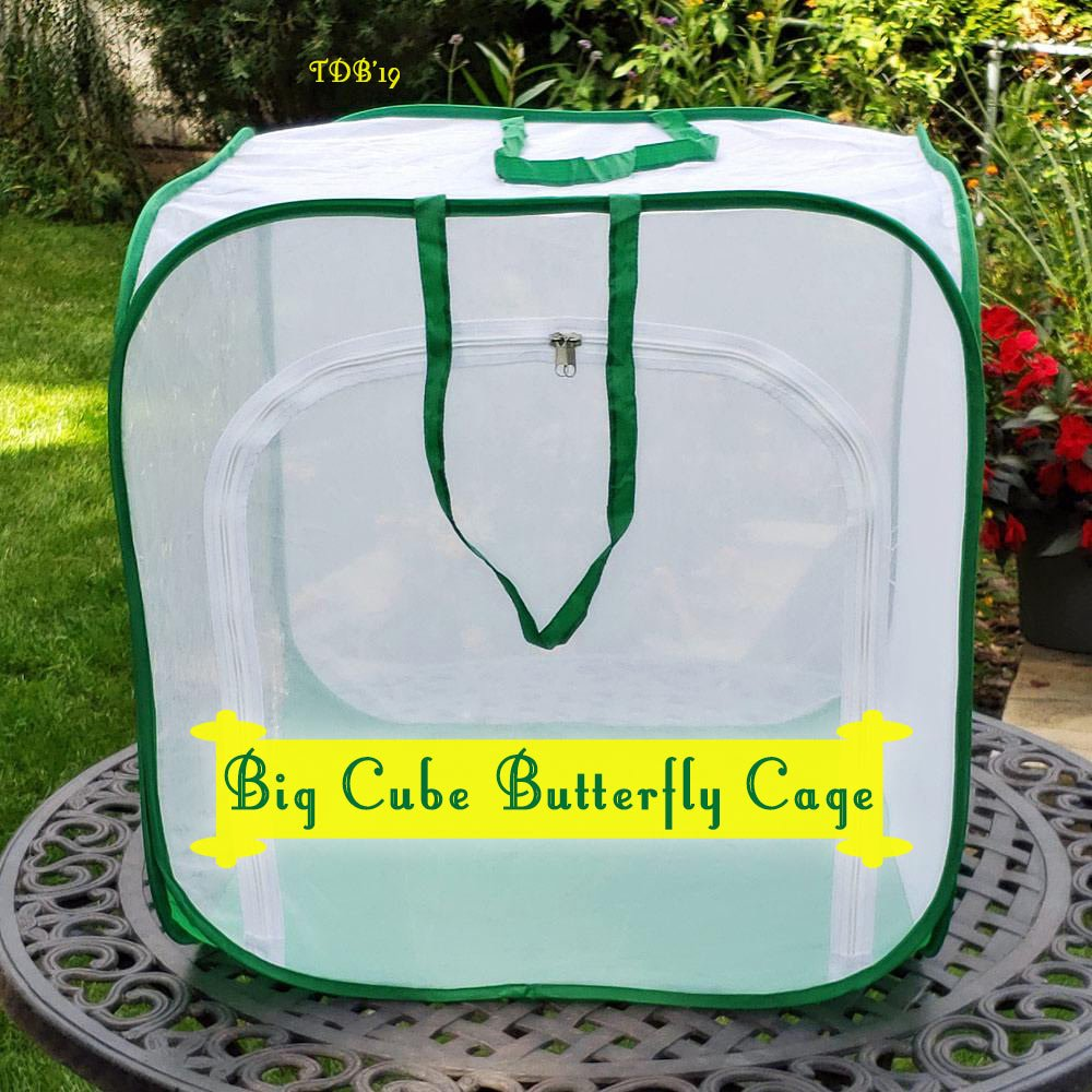 Big Cube Caterpillar Cage- Raise Monarchs through the Butterfly Life Cycle