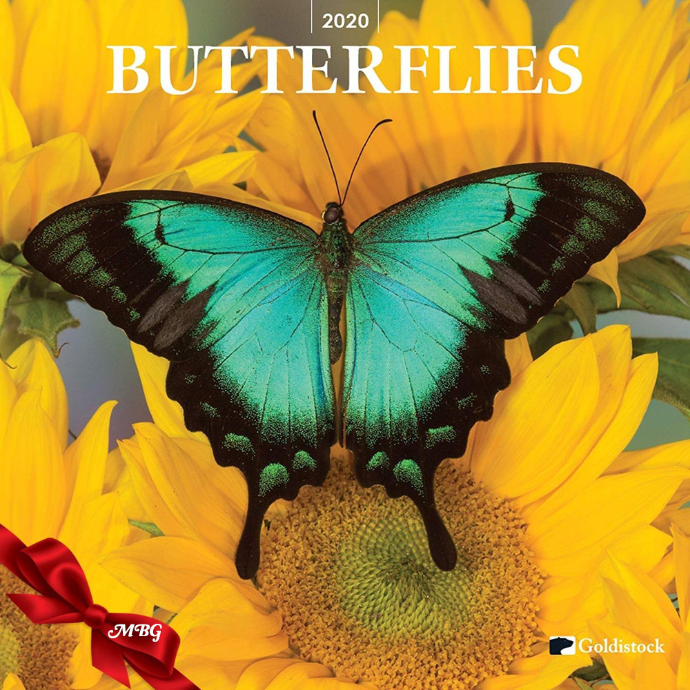Goldistock 2020 Large Wall Calendar- Butterfly Gift Idea