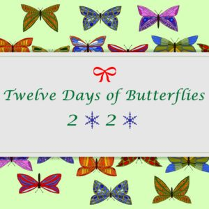 Twelve Days of Butterflies 2020